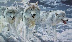 Night Run Artic Wolves by John Seerey Lester | eBay