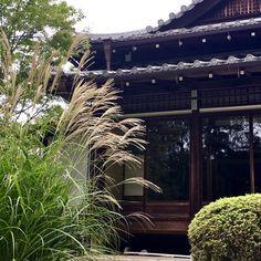 Zen temple Kyoto, Temple, Zen, Architecture, Plants, Arquitetura, Temples, Plant, Architecture Design