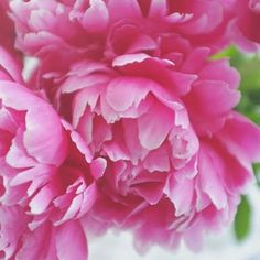 Peonies | Still Dacha Life  •  •  •  #flowerslovers #flowerporn #flowerstagram #picoftheday #peonies #flowermagic #flowersofinstagram #floweroftheday #photooftheday #botanical #flowerstyles_gf #blooms #floral #flower #insta_pick_blossom #nature #beautiful #amazing #petals #plants #peony #spring #florals #flowers #summer #roses #blossom #bloom #petal #peonyseason