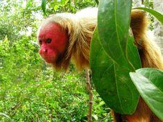 10 animais estranhos do Brasil | HypeScience