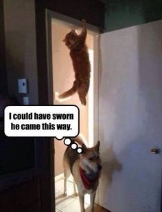 See more humorous pet related content at www.facebook.com/fluffnfur #ForTailsOnly #FTO