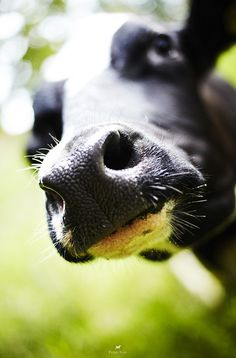"""""""In the past few years, producers of grass-fed beef have been looking for ways to increase the amount of marbling in the meat so that consumers will have a more familiar product. But even these fatter cuts of grass-fed beef are lower in fat and calories than beef from grain-fed cattle."""" - Health Benefits of Grass-Fed Products"""