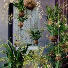 Cutivar plantas en forma ornamental. Sin macetas y sin un lugar en tierra. Magnífica  idea si tenemos poco lugar en casa o somos eco- amigables.