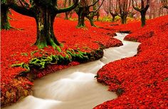 Red Forrest Portugal