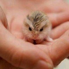 A tiny, baby hamster(I think). SO CUTE!