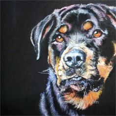 Portrait of a young Rottweiler dog created in soft pastels on black paper.  Animal and Pet Artist: www.ruthbradyart.com