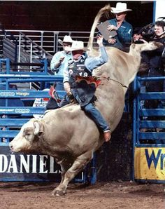 Image Result For Bull Riding Wallpapers Best Of Bullriding Wallpapers Sports Hq Bullriding Pictures