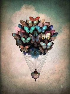 Butterflies fly, birds fly, but my mind climbs