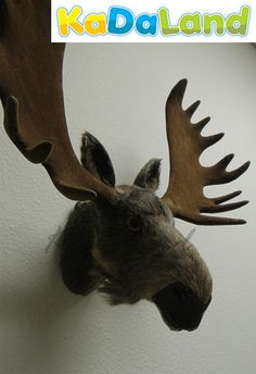L x H: 18 x 16 (Including Antlers)    This Moose Head is beautifully hand-crafted from real goat fur over a plastic mold. This collectible will make a