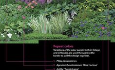 A Strategy for a Long Border: Repeat colors. Variations of the color purple, both in foliage and in flowers, are used throughout the border to pull the design together. 1. Phlox paniculata cv. 2. Ageratum houstonianum 'Blue Horizon' 3. Astilbe 'Purple Lance' 4. Verbena X hybrida 'Patio Blue' 5. Monarda didyma 'Violet Queen