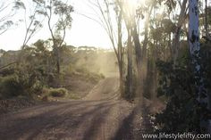 Jo Castro takes you to the unique Dryandra Woodland, 2 hours south east of Perth. Discover endangered species, top Australian bush walks, back to nature . Western Australia, Perth Australia, Society Islands, Australian Bush, Bridgetown, Pitcairn Islands, Easter Island, What A Wonderful World, Wonders Of The World