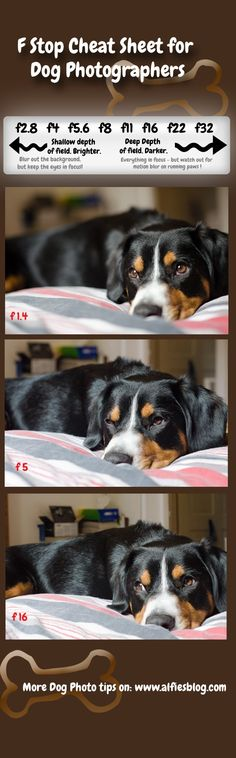 We're talking about Aperture and f-stops on the blog today - its more fun than it sounds! Click the pic for more tips on how to improve your dog photography *waggy tail*