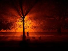 a man uses a torch to walk through a park during cold fog at night in athboy thomson reuters llc