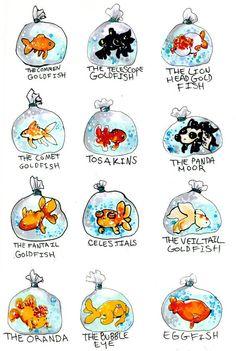 The many types of goldfish. by ~MiniMushroom on deviantART: