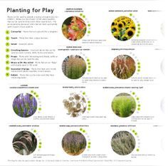 planting for play - downloadable poster of plants and the sensory benefits they are for play experiences