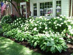 Lush Hydrangeas and Hostas