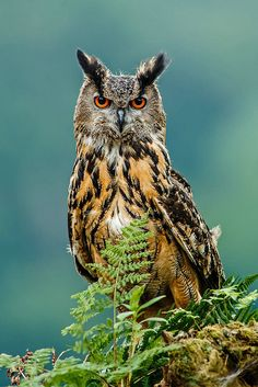 Owl  |  ©Naturfotografie - Stefan Betz on Flickr