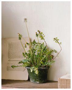 カメラワークショップ - 植物誌
