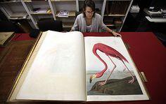 rare first edition John James #Audubon illustrated The Birds of America #books #art #krausse #collector #auction