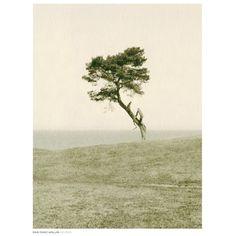 Haväng Poster fra Dan Isaac Wallin. En rå og vakker poster som er et et ensomt tre midt i ingenmanns...