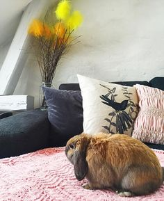 We would love to wish everyone a Happy Easter by giving away a pink Cosy trow! Tag 3 people that you would like to have a cozy time with during Easter! We will randomly select the winner on Easter Eve. (Photo by @emly_3) #oddmolly #oddmollyhome #cosythrow