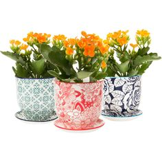 Dot & Bo 3-Pc. Ophelia Pot and Saucer Planters Set (53 CAD) ❤ liked on Polyvore featuring home and kitchen & dining
