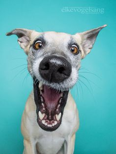 """What a crackpot - A not so serious project about canine expressions. Or: """"Sorry, Fido, you are adopted!""""  For press requests, prints, bookings: info@elkevogelsang.com"""
