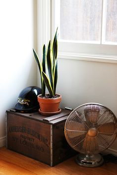 i have this plant, mine isnt quite this healthy. hopefully it will be by the time i can afford the vintage crate and fan :)