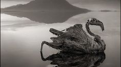 A lake actually turns animals into stone  But only dead animals and not instantly It is Lake Natron in Tanzania. Its alkaline water has a pH as high as 10.5!  #geology #images #petrification