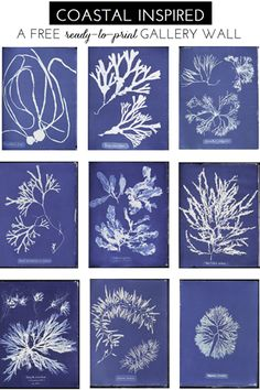 Who knew British algae could be so beautiful? But, this collection of free art prints would make a pretty amazing blue and white gallery wall. A nice way to bring some Summer style and intense color into your home. . . Download the full (free) collection here.   sconce  //  chair  //  desk  //  paint  …