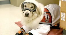OH FUR CUTE Are you ready for it? For your daily dose of adorable? Because today, it's brought to you by a pup in PPE: Golden Retriever service dog, Sampson. And what makes this story so damn cute is Sampson learned how to wear PPE so he can work in the lab as his owner's […] The post Service Dog Learns How To Wear PPE So He Can Work In The Lab With His Owner appeared first on Scary Mommy.