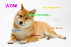 WoW Such Dog Meme | ... pronunciation: How do you pronounce the name of the shibe doge meme