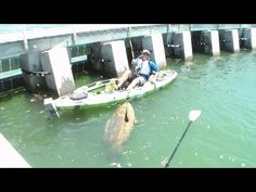 WATCH: Kayaking angler pulls in monstrous catch - FOX 8 WVUE New Orleans News, Weather, Sports, Social