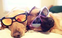 Best buds. #eyeglasses