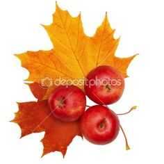 Image detail for -Autumn apples and leaves isolated on white background by Oleg Fedotov ...