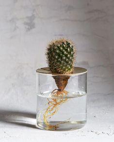 Brass lidded glass terrarium ; Gardenista