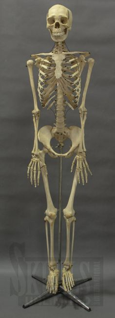 some medical oddities at the museum of osteology | ••• oddities, Skeleton