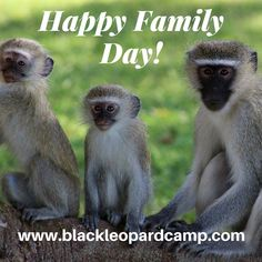 Wishing you all a very Happy Family Day! From the Black Leopard Camp Family ❤️ Family Day, Happy Family, Camping, Mountains, Landscape, Animals, Black, Campsite, Animales