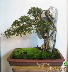 http://www.happybonsai.com/wp-content/uploads/2010/08/landscape-bonsai-01.jpg