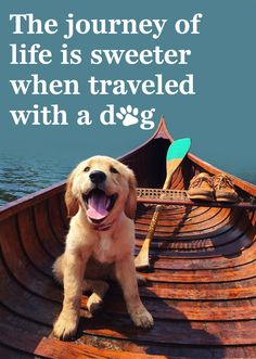 'The journey of life is sweeter when traveled with a dog' #quotes #golden #puppy