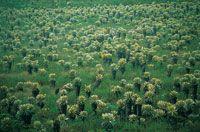 En Paletará, el valle de los Frailejones se caracteriza por la alta densidad de individuos del género Espeletia.