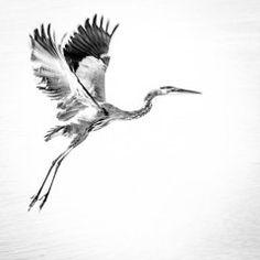 Animals Art - Flight by Patricia Christakos