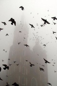 fog, birds, black and white Six Of Crows, Flock Of Crows, Crows Ravens, Drawn Art, Dragon Age, Belle Photo, Black And White Photography, Mists, Storyboard