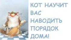 Чистота в доме где живет кот