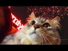 Cat on Shoulder under Cherry Blossoms (1:19)