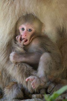 **Monkey