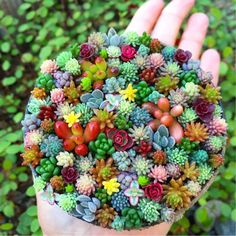 Tiny Succulent Planters Are The Cutest Thing You Will See