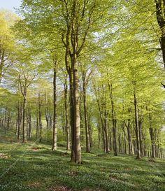 Summer Beech Wood - Fototapeter & Tapeter - Photowall