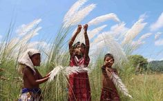 Kids playing with 'Kash ful' a famous flower found all around Bangladesh