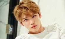 Kabar Terbaru Lumajang Kabar Lumajang Idol Kpop Penyanyi